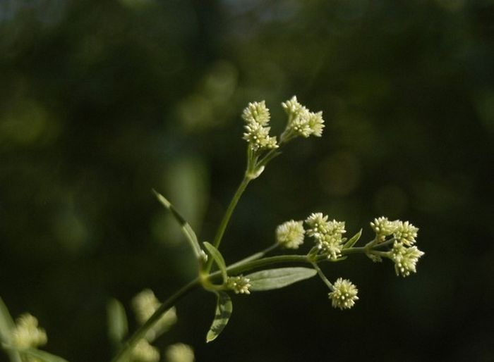 12 plantas medicinais para cultivar em busca da saúde 13