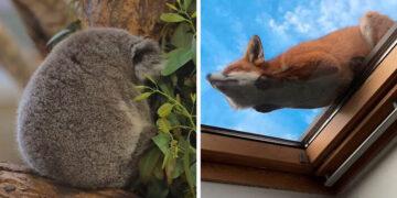 41 vezes as pessoas avistaram os animais mais bonitos e tiveram que tirar uma foto deles 11