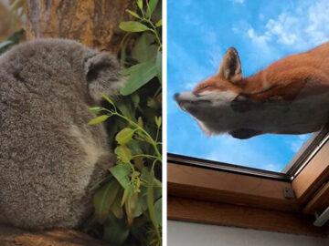 41 vezes as pessoas avistaram os animais mais bonitos e tiveram que tirar uma foto deles 2